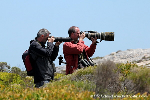 Getting the close up photo of Ground Woodpecker during a Birding Africa Cape Peninsula day trip © Otto Schmidt