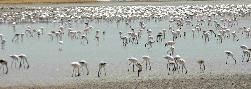 Greater and lesser Flamingo at Walvis Bay on this Birding Africa tour © Utz Klingenböck