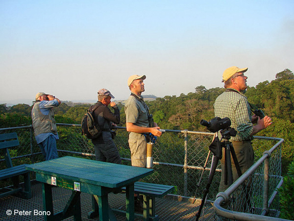Birding from Dlinza Forest Tower © Peter Bono