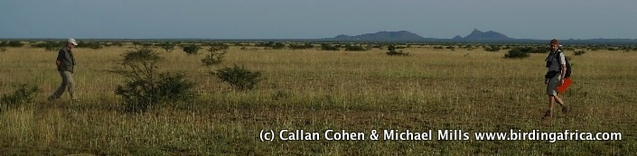 Bird and vegetation surveying on the Wajaale Plains, Somaliland © Callan Cohen & Michael Mills www.birdingafrica.com