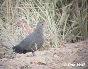 stone partridge Image Page